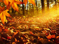 Indian Summer © Smileus - stock.adobe.com